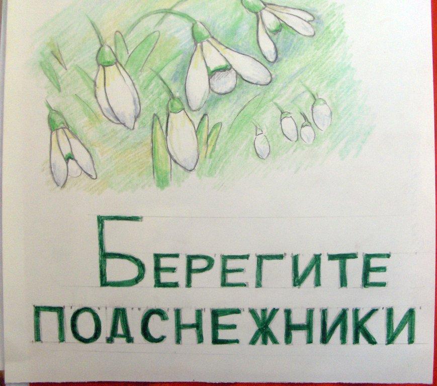 плакат берегите растения картинки правило